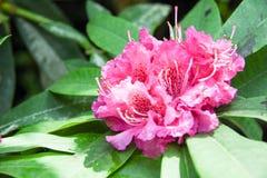 Turismo da abóbada da flor de Singapura Imagem de Stock