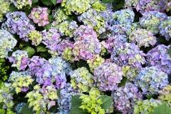 Turismo da abóbada da flor de Singapura Foto de Stock