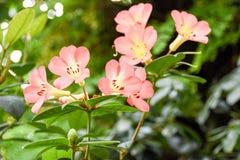 Turismo da abóbada da flor de Singapura Imagem de Stock Royalty Free