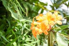 Turismo da abóbada da flor de Singapura Fotografia de Stock