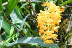 Turismo da abóbada da flor de Singapura Fotografia de Stock Royalty Free
