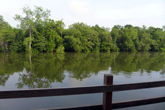 Turismo de Eco - balcón del centro turístico con la opinión tropical del río Foto de archivo