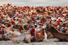 Turismo de Eco - paseo de los camellos - transporte del desierto - Dunhuang Imagenes de archivo