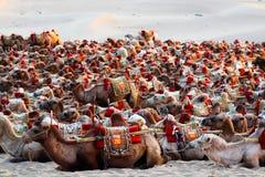 Turismo de Eco - paseo de los camellos - transporte del desierto - Dunhuang Imagen de archivo