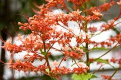 Turismo della cupola del fiore di Singapore immagine stock