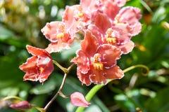 Turismo della cupola del fiore di Singapore immagini stock libere da diritti