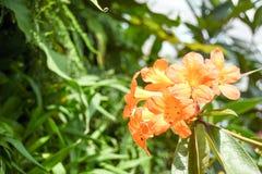 Turismo della cupola del fiore di Singapore fotografie stock libere da diritti