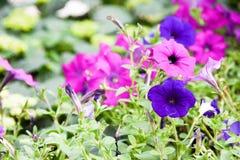 Turismo della cupola del fiore di Singapore fotografia stock