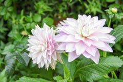 Turismo della cupola del fiore di Singapore immagini stock