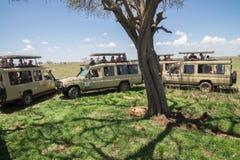 Turismo maciço: Leão masculino cercado por turistas do safari foto de stock