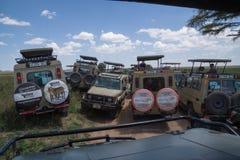 Turismo maciço: Multidão de turistas do safari que procuram animais selvagens imagem de stock
