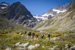 Turismo nas montanhas caucasianos em Geórgia Foto de Stock Royalty Free