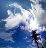 turismo Palme contro un cielo blu immagine stock libera da diritti