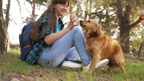turist- flicka i skog p? stopp med en hund Den h?rliga flickan reser med husdjuret husmor smeker hunden Lycklig kvinnaavelsdjur stock video