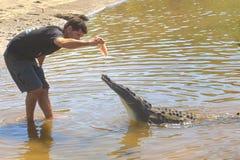 Turist- handbok som matar en krokodil Royaltyfri Fotografi