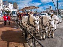 Turist i den häst drog vagnen, Cherbourg, Frankrike Arkivbild