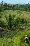 Turist- kock Islands för besökAitutaki lagun Royaltyfri Fotografi