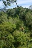 Turist- kvinna som går på en djungelvinandelinje Royaltyfri Foto