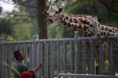Turist på den Taiping zoo Arkivbild