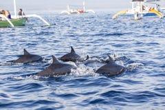 Turist- seende delfin på den Lovina stranden, Bali under soluppgång royaltyfria foton