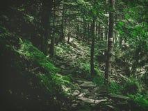Turist- slinga för skog i bergen bland träd, stenig bana arkivbild