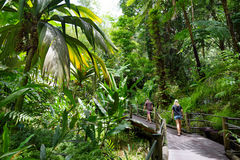 Turist som beundrar frodig tropisk vegetation av Hawaii den tropiska botaniska trädgården av den stora ön av Hawaii Royaltyfri Foto