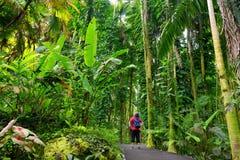 Turist som beundrar frodig tropisk vegetation av Hawaii den tropiska botaniska trädgården av den stora ön av Hawaii Arkivbilder
