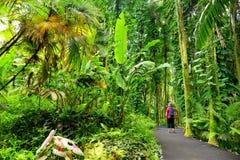 Turist som beundrar frodig tropisk vegetation av Hawaii den tropiska botaniska trädgården av den stora ön av Hawaii Arkivfoto