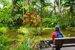 Turist som beundrar frodig tropisk vegetation av Hawaii den tropiska botaniska trädgården av den stora ön av Hawaii Fotografering för Bildbyråer