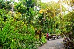 Turist som beundrar frodig tropisk vegetation av Hawaii den tropiska botaniska trädgården av den stora ön av Hawaii Arkivbild