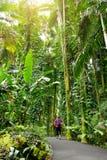 Turist som beundrar frodig tropisk vegetation av Hawaii den tropiska botaniska trädgården av den stora ön av Hawaii Arkivfoton
