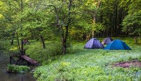 Turist som campar i skog Royaltyfria Bilder