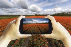 Turist som fotograferar en tulpanlantgård royaltyfri foto