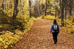 Turist som går i skog Arkivfoton