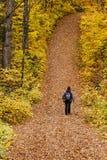 Turist som går i skog Arkivbild