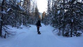 Turist som går till och med vinterskog stock video