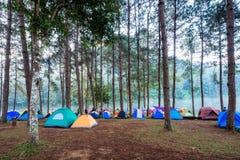 Turist- tält som campar i pinjeskog på behållare i morgon Arkivbilder