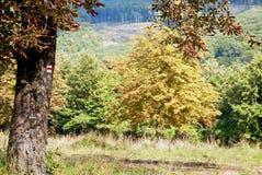 Turist- tecken på det kastanjebruna trädet i höstskogen Arkivfoton