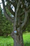 Turist- tecken på stammen av ett gammalt träd Arkivfoton
