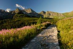 turist- trail Arkivfoton