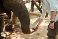 Turist- trycka på en asiatisk elefant i Thailand Royaltyfria Foton