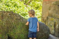 Turist- upptäckande Ubud för pojke skog i apaskogen, Bali Indon fotografering för bildbyråer