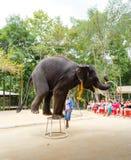 Turist- utfärd, show av elefanter, till Samui Royaltyfria Bilder