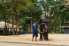 Turist- utfärd, show av elefanter, till Samui Arkivfoton