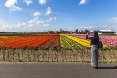 Turista asiático de la muchacha en la granja de los tulipanes imagenes de archivo
