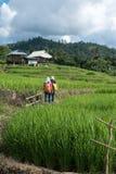 Turista che cammina nel giacimento a terrazze sulla montagna, PA Pong Pian del riso Fotografia Stock Libera da Diritti