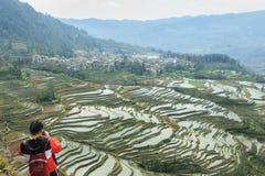 Turista cinese che prende le immagini dei terrazzi del riso di YuanYang dalla cima di una scogliera Terrazzi del riso di YuanYang Fotografia Stock