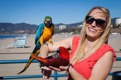 Turista consideravelmente alegre com os papagaios do Macaw na praia no wi Foto de Stock Royalty Free
