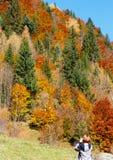 Turista da mulher na montanha Carpathian do outono, Ucrânia foto de stock royalty free