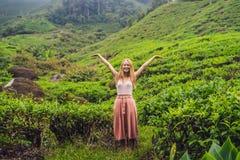Turista das mulheres em uma plantação de chá As folhas de chá selecionadas, frescas naturais no chá cultivam em Cameron Highlands imagem de stock
